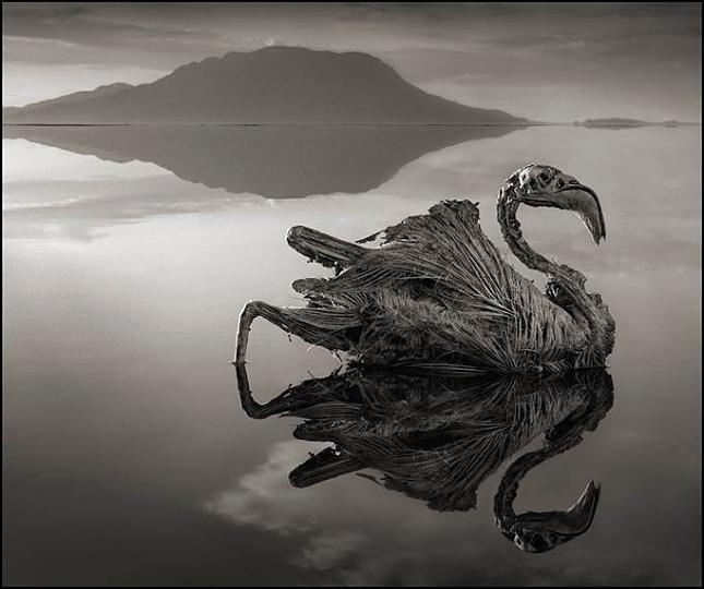 versteinerten Tiere am Lake Natron